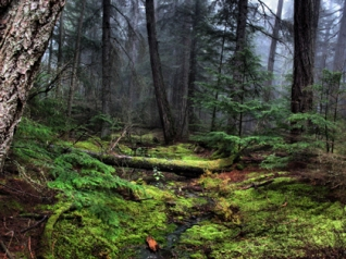 enchanted-forest-img_3617a-web.jpg