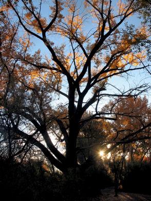 tree-at-dawn.jpg